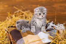 Two Kittens Sit In A Wicker Basket In A Wooden Shed On A Farm