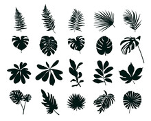 Set Of Silhouettes Of Tropical Leaves. Vector Illustration