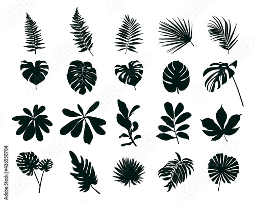 Fotografie, Obraz Set of silhouettes of tropical leaves. Vector illustration