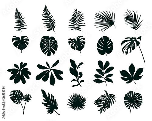 Fotografia Set of silhouettes of tropical leaves. Vector illustration