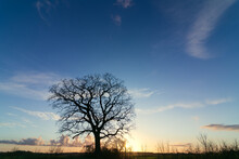 Single Oak Tree With Blue Evening Sky In Winter.