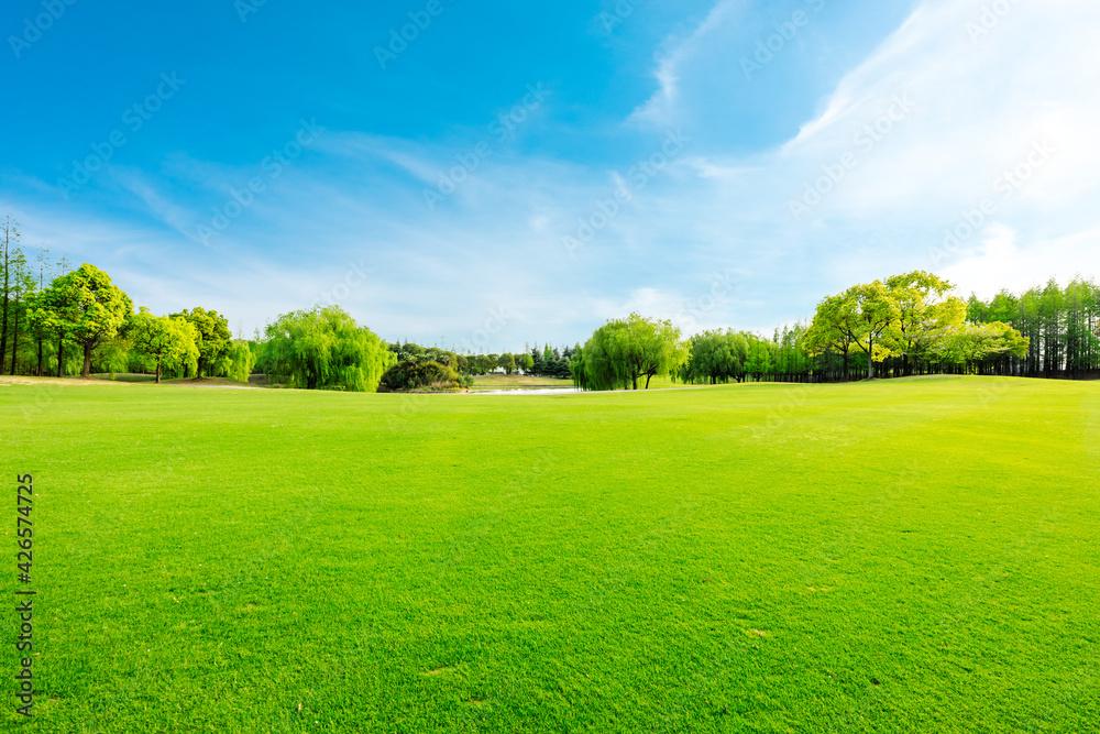 Fototapeta Green grass and forest in spring season.