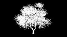 An Artistic Tree