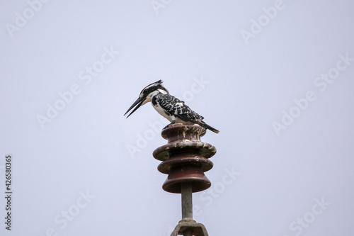 Canvas-taulu Indian birds from kerala