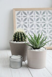 Beautiful Aloe and Cactus in pots with decor on white wooden table. Different house plants