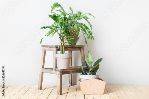 Fototapeta Wooden stand and pots with plants on light background obraz na płótnie