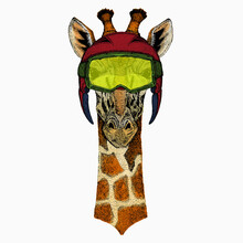 Vector Giraffe Portrait. African Safari Animal Head.