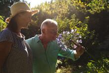 Happy Caucasian Senior Couple Walking In Sunny Garden, Smelling Flowers