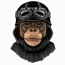 Vector Chimpanzee Portrait. Ape Head, Monkey Face. Vintage Motorcycle Biker Helmet.