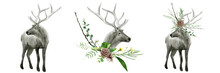 Watercolor Realistic Deer Forest Animals Set Isolated On A White Background Illustration.