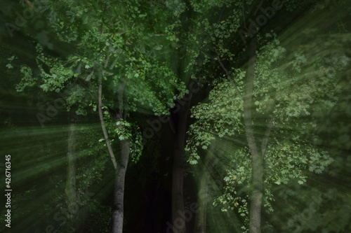 Fototapeta drzewa obraz