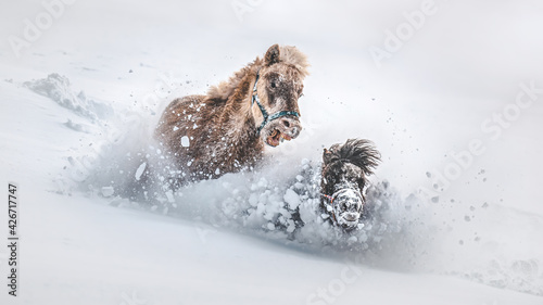 Fotografie, Obraz Playing ponies in the snow