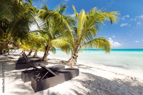 Papel de parede Beach scene with sunbeds under coconut palms