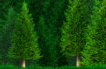 Vector Clipart Pine Or Spruce Forest Nature