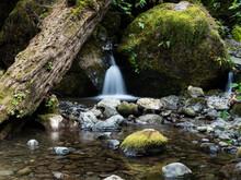 Merriman Creek Cascading At Merriman Falls In Lake Quinault Valley - Olympic Peninsula, WA, USA