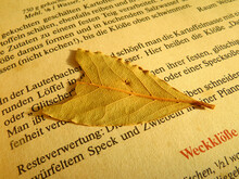 The Old Book With Leaves