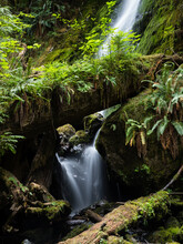 Merriman Falls In Lake Quinault Valley - Olympic Peninsula, WA, USA