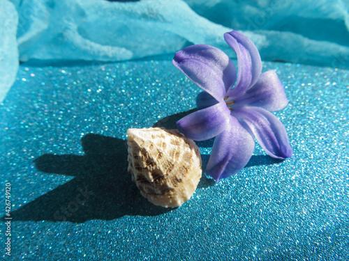 Fototapeta sea shell