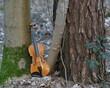Eine orangene Violine zwischen Äste und Baumstämme teilweise mit grünem Moos bedeckt.