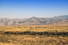 The Road In The Desert Area Of Uzbekistan. Buildings On The Hill And Grazing Herds