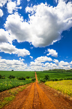 Country Road. Beautiful Rural Landscape