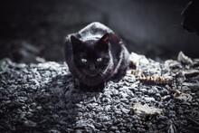 Black Cat On Street