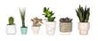 Leinwandbild Motiv Group of various unique houseplants in pots isolated on a white background