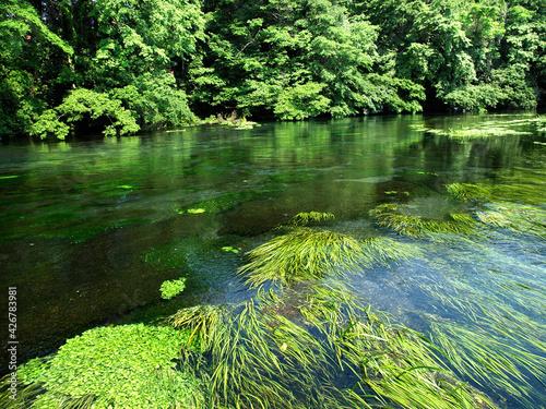 Fotomural 静岡県清水市に流れる柿田川。日本で最も短い一級河川。流量のほとんどが富士山に由来する湧き水である。その水質、透明度は類を見ないほどだ。