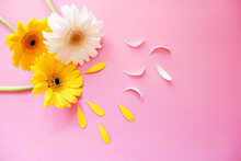 Flowers Composition On Pink Background. Yellow Daisy And Petals. Spring, Summer, Floral Background For Design. 春の背景、春のフラワー素材