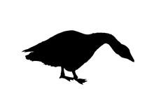 Goose Vector Silhouette Illustration Isolated On White Background. Anser Anser Domesticus Isolated On A White Background. Water Bird. Domestic Animal. Gander Symbol.