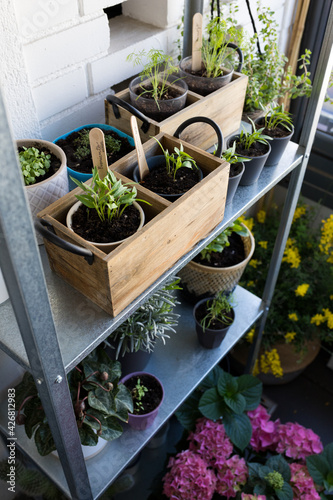 Fototapeta Vertical urban garden full of different growing plants and flowers in a balcony. obraz