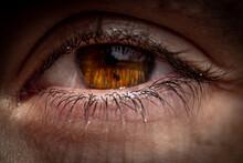 Brown Eye Macro Shot