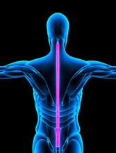 Vertebral Column Rear View X-ray
