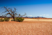 Faune De Namibie