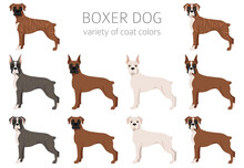 Boxer Dog Clipart. Different Poses, Coat Colors Set.