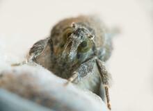 Moth Looks At Camera