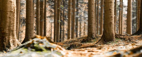 Las widziany oczami niskiej osoby