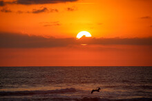 Sunset Over The Ocean With Pelicans Flying Over The Sun In Costa Rica