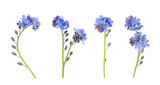 Set with beautiful tender forget me not flowers on white background. Banner design