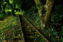 森へ続く廃線