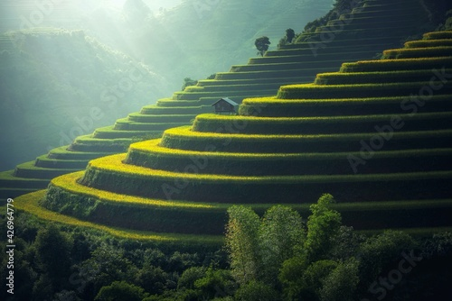 Fotografie, Obraz Scenic View of Rice Paddy
