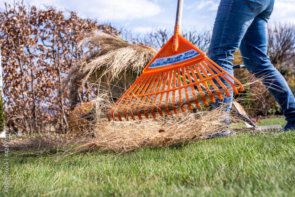 Fototapeta Praca w ogrodzie, kobieta grabi  trawę , wiosenne porządki ogrodowe,
