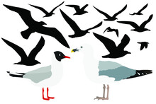 Gull Bird Set, Vector Illustration. The Silhouette Of A Flying Bird, A Great White-headed Sea Gull And A Lake Gull.