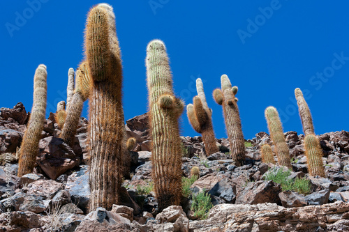 Cactus Canyon in the Atacama Desert - Chile Fototapet