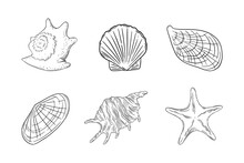 Seashells Set With Starfish, Scallop, Oyster And Other Barnacles. Shells Isolated In White Background. Sketch Ector Illustration