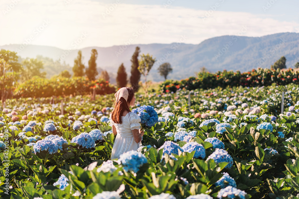 Fototapeta Young woman traveler relaxing and enjoying with blooming hydrangeas flower field in Thailand, Travel lifestyle concept