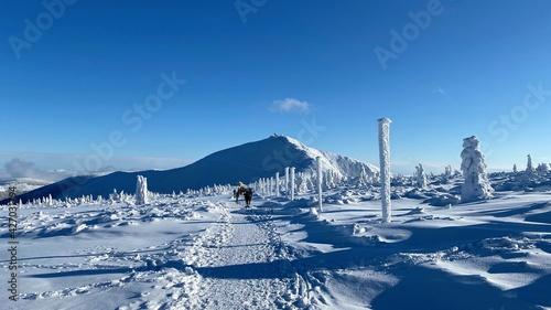 Fototapeta Śnieżka zimą obraz