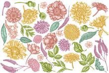 Vector Set Of Hand Drawn Pastel Poppy Flower, Gerbera, Sunflower, Milkweed, Dahlia, Veronica