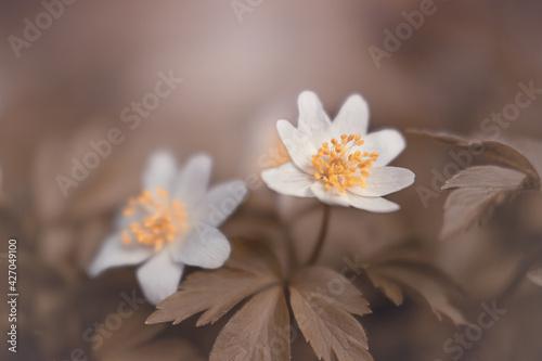 Obraz Magia wiosennych kwiatów - fototapety do salonu