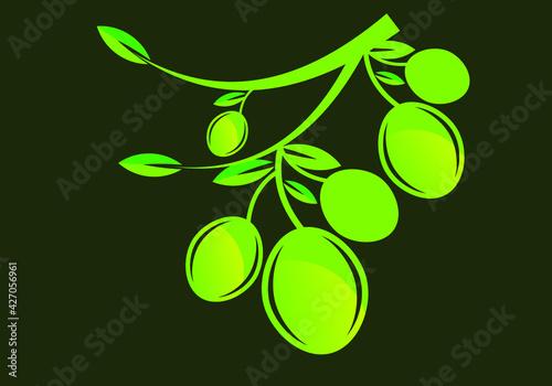 Fototapeta olive oil logo or icon design vector template